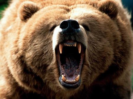 【ワインレッドな熊】 KumaBu 熊部:第四章 渋谷の怖い夜
